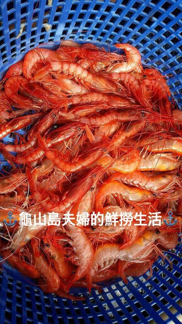 附圖五_甜蝦胭脂蝦