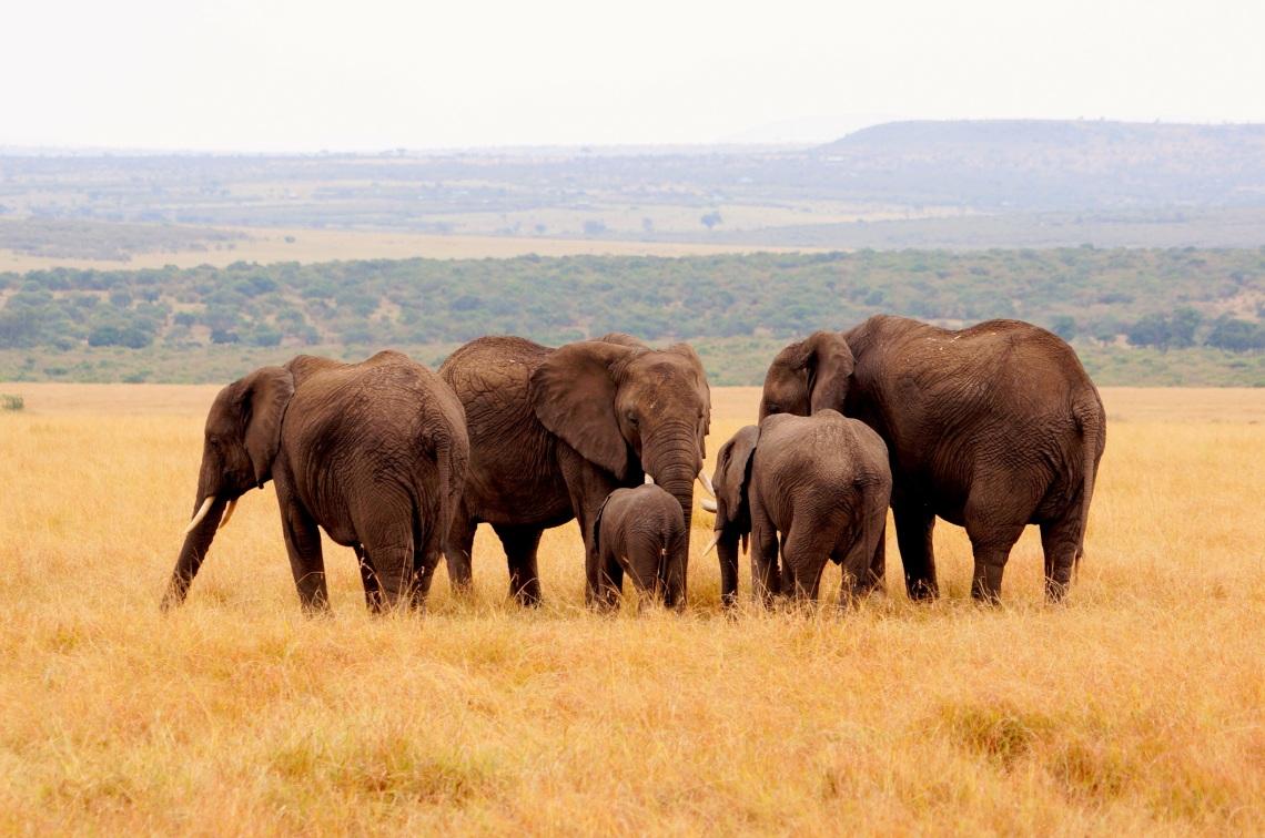 大象一家人!