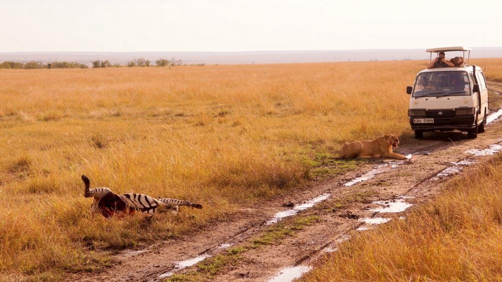 剛開完斑馬的姆斯 (?) 斑馬的肚子都被吃了 QQ
