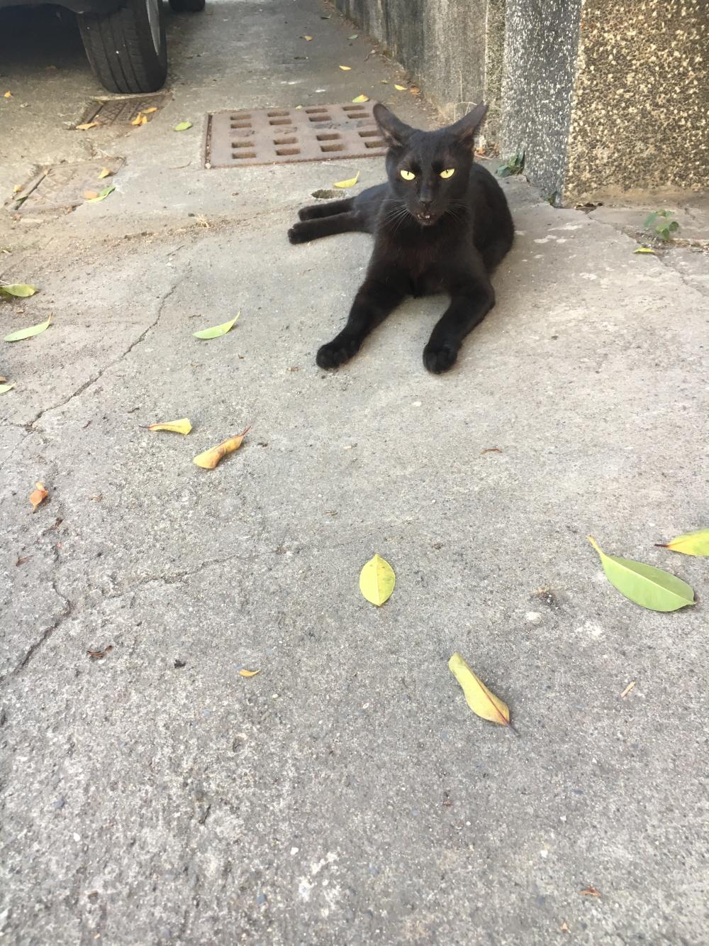 圖九:黃埔新村黑貓